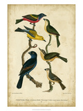 Wilson's Painted Bunting Posters by Alexander Wilson