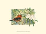 Tangara écarlate Posters par Janet Mandel