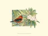 Scarlet Tanager Posters by Janet Mandel
