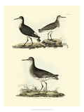 Selby Sandpipers II Reproduction giclée Premium par John Selby