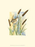 Marsh Wren and Cattails Prints by Janet Mandel
