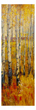 Vivid Birch Forest II Giclee Print by Tim O&#39;toole