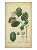 Vintage Turpin Botanical III Prints by  Turpin