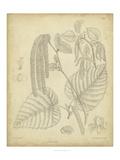 Vintage Curtis Botanical II Affiches par Samuel Curtis