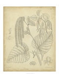 Vintage Curtis Botanical II Prints by Samuel Curtis