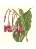 Tropical Indian Reed Kunstdrucke von Samuel Curtis