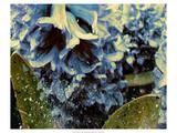 Silverbell II Premium Giclee Print by Danielle Harrington