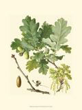 Acorns & Foliage II Prints