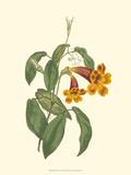 Vibrant Blooms I Art by Sydenham Teast Edwards