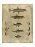 Pisces Composition I Art