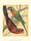 Cassell's Parrots IV Prints by  Cassell