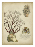 Imperial Coral III Prints