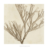 Brilliant Seaweed VII Prints