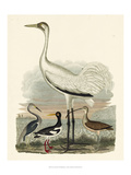 Heron Family III Prints by A. Wilson