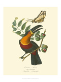 Nature Jardin III Prints by L. Curmer