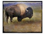 Bison Portrait II Premium Giclee Print by Chris Vest