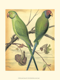Cassell's Parrots III Print by  Cassell
