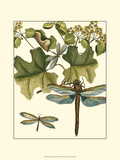 Dragonfly Medley II Prints
