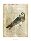 Antiquarian Birds I Prints