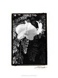 Striking Orchids I Prints by Laura Denardo