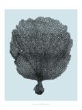 Coral on Aqua II Poster