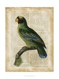 Antiquarian Birds VI Poster