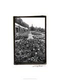 Garden Elegance VIII Prints by Laura Denardo