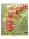 Non-embellished Island Orchid III Giclee Print by Chariklia Zarris