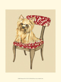 Pampered Pet II Print by Chariklia Zarris