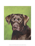 Dog Portrait, Chocolate Prints by Jill Sands