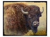 Bison Portrait I Giclée-Premiumdruck von Chris Vest