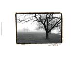 Weit entfernte Bäume Kunstdrucke von Laura Denardo