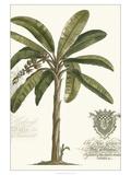 Non-embellished Palm Fresco I Giclée-Premiumdruck von  Vision Studio