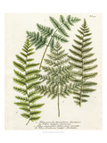 Fern Gathering I Art by Johann Wilhelm Weinmann