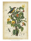 Antique Bird in Nature III Prints