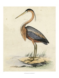 Antique Heron II Reproduction proc&#233;d&#233; gicl&#233;e