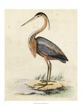 Antique Heron II Art
