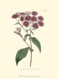 Mauve Beauty I Kunstdrucke von Samuel Curtis