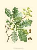 Acorns & Foliage I Posters
