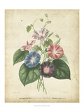 Victorian Bouquet I Prints by  Maubert