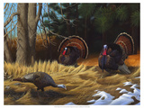 Turkies Premium Giclee Print by Leo Stans