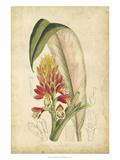 Curtis Tropical Blooms II Poster af Samuel Curtis