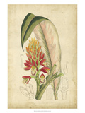 Curtis Tropical Blooms II Kunstdruck von Samuel Curtis