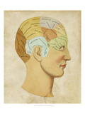 Vintage Phrenology Reproduction proc&#233;d&#233; gicl&#233;e