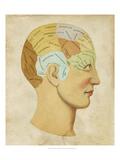 Vintage Phrenology Obrazy