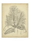 Vintage Curtis Botanical V Poster von Samuel Curtis