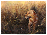 Golden Grass Premium Giclee Print by Leo Stans