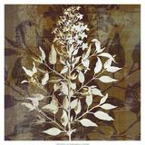Prairie Mix I Giclee-tryk i høj kvalitet af John Butler