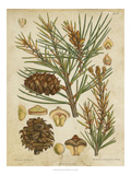 Vintage Conifers II - Poster