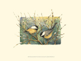 Chickadees and Pussy Willow Prints by Janet Mandel